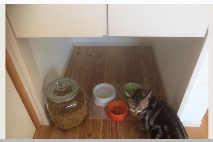 アキュラホーム  猫ものびのびな平屋の住まい 。猫のごはんスペース